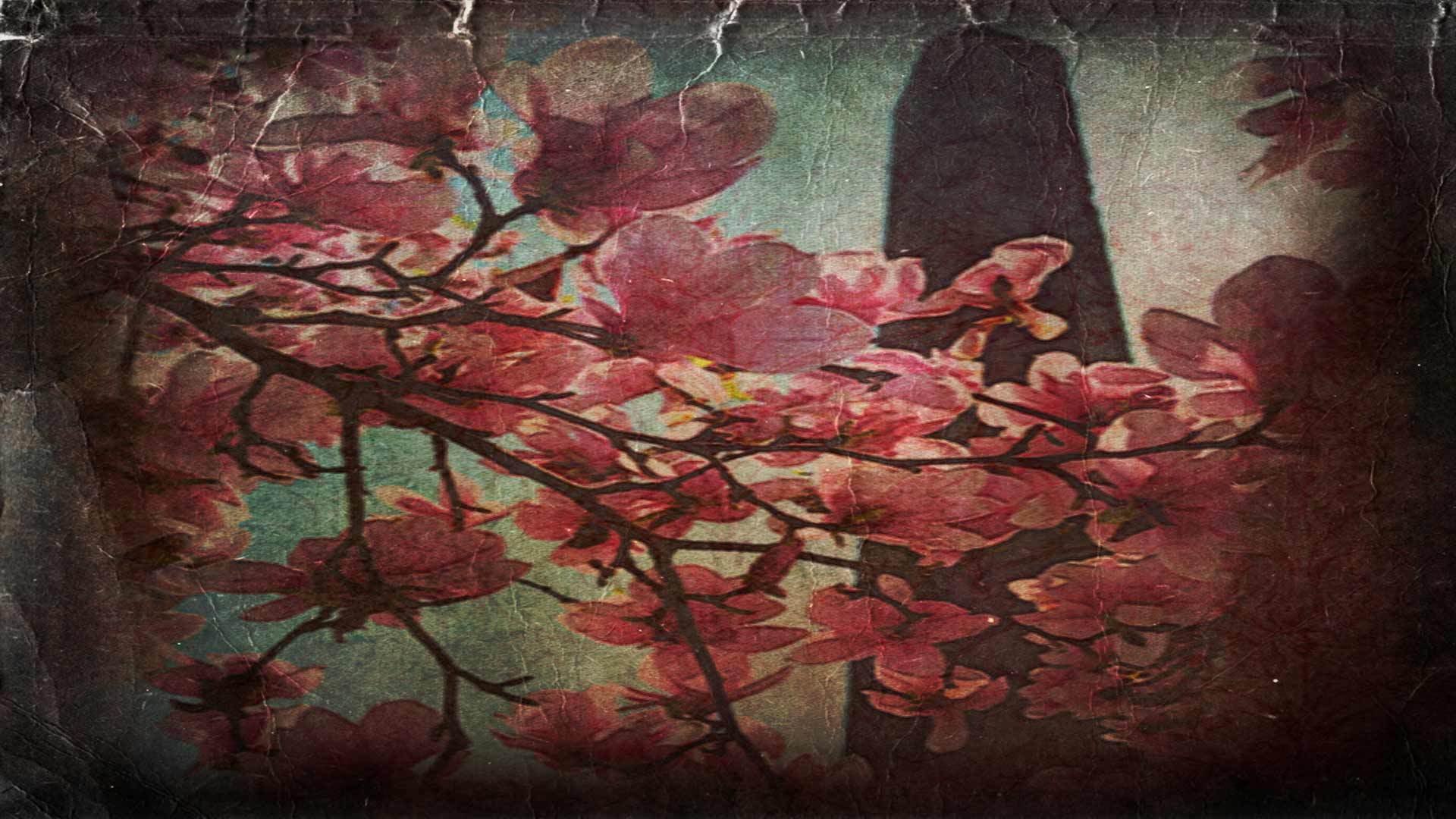 the obelisk in Central park, spring magnolia blooms